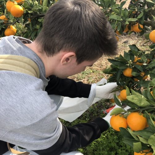 Event Report: Orange Picking