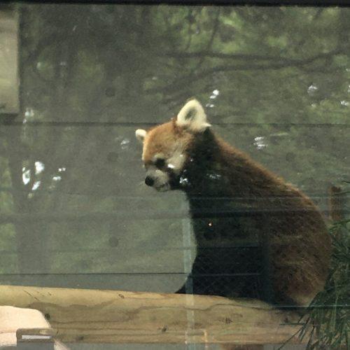 遠足・福岡市動植物園